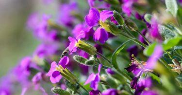 éliminer les insectes sur les fleurs