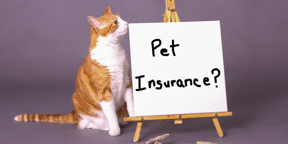 Assurance Chat